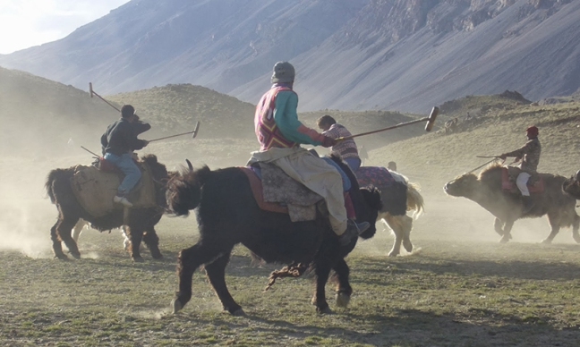 Yak Polo Yak Attack Broghill Valley Pakistan DAWN